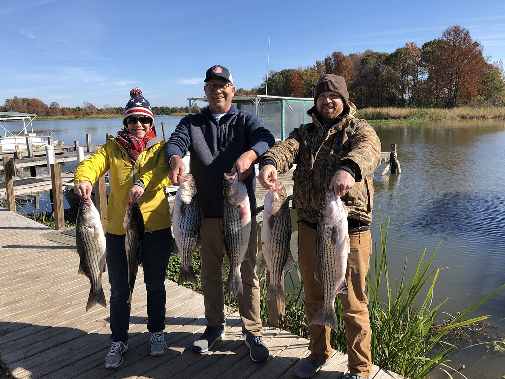 Santee Cooper Fishing Tours, Striper, Bass, Catfish and more