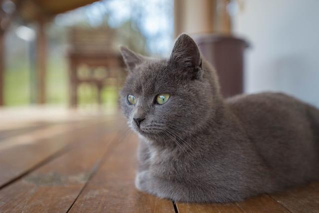 Kika (12)