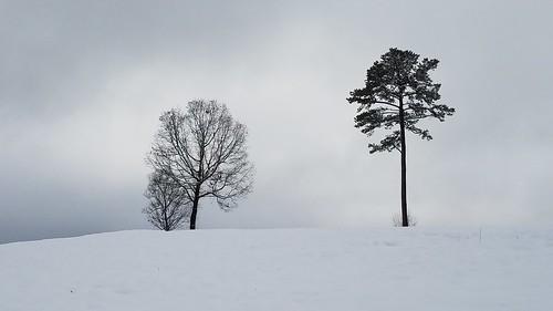snow trees landscape