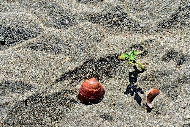 Shadow on the Beach 02