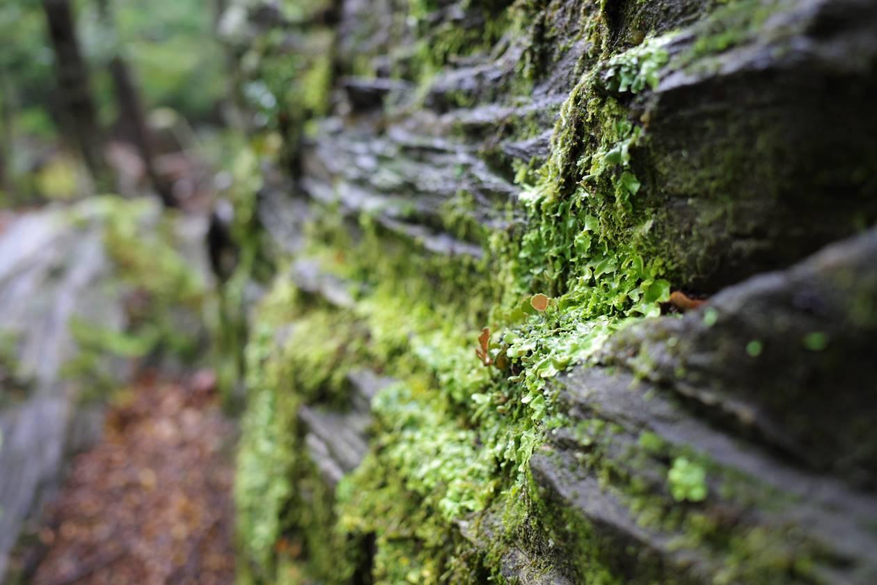 ニュージーランドの苔
