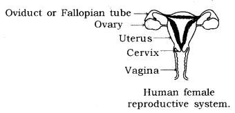 How do Organisms Reproduce Class 10 Notes Science Chapter 8 14