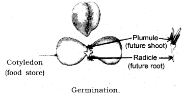 How do Organisms Reproduce Class 10 Notes Science Chapter 8 12