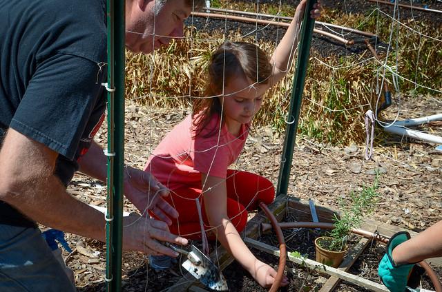 GIdeon Pond Garden Planting