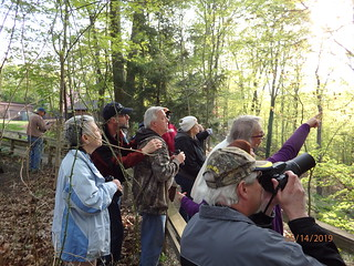 Early Evening Bird Walk Birding by Penny O'Connor