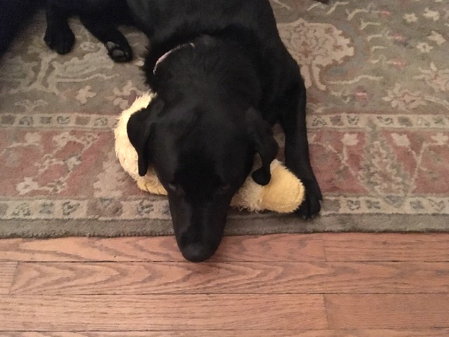 Daisy and her duck