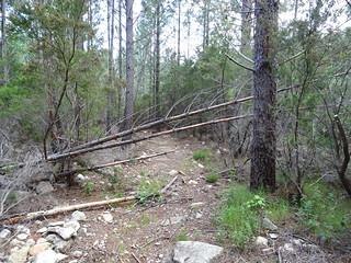 Retour sur le Chemin de Paliri : un tronc à couper