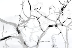 Branches composite