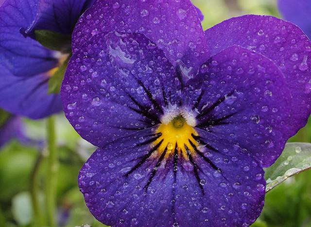 Purple Lives' Matter...