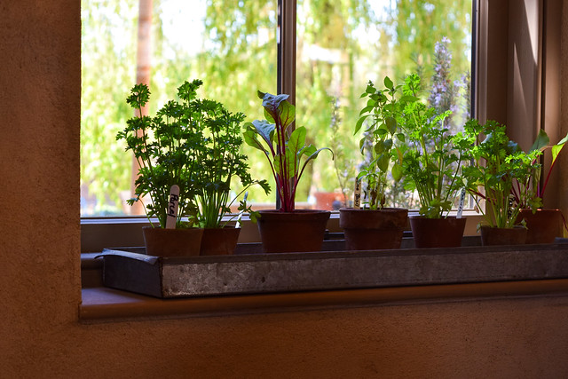 Windowsill Herbs at The Pig Hotel, Bridge