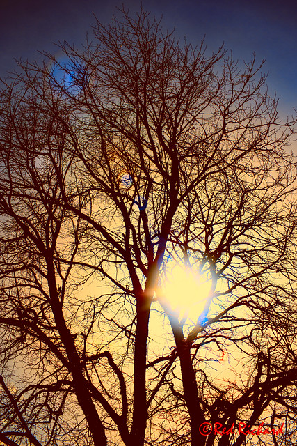 Tree flare