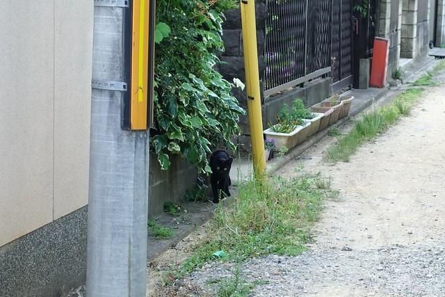Today's Cat@2019-05-17