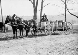 Transporting potatoes, Woodstock, New Brunswick / Transport de pommes de terre, Woodstock, Nouveau-Brunswick