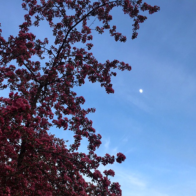 Flowering Tree and The Moon