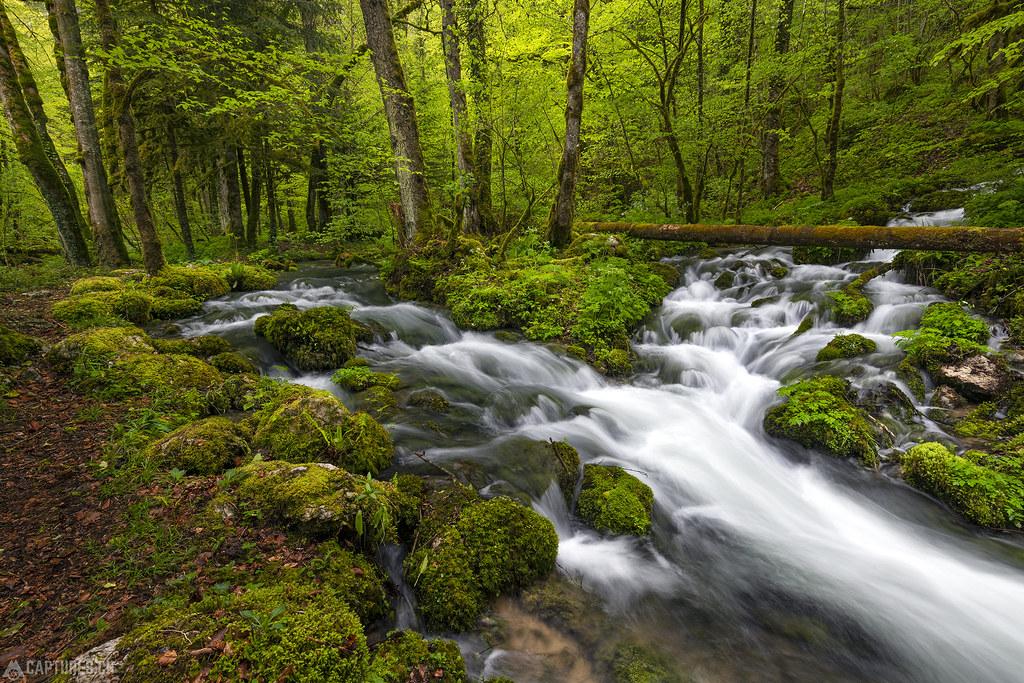 Green forest - Gorges de Pichoux