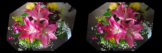 Popin Lilies