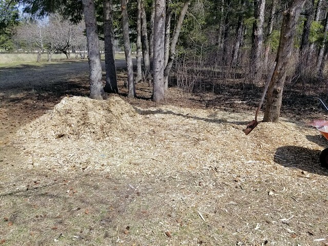 20190510.cleanup.mulching.chip.pile