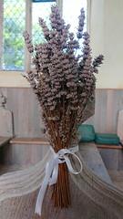 last year's lavender
