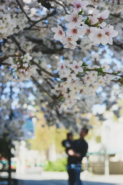 my sakura people