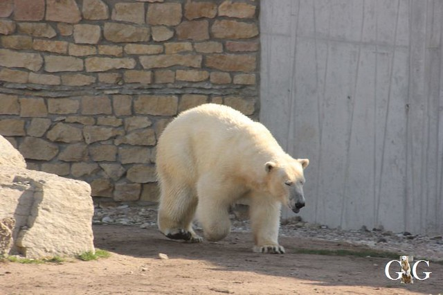 Besuch Zoo Tallin 27.04.201918