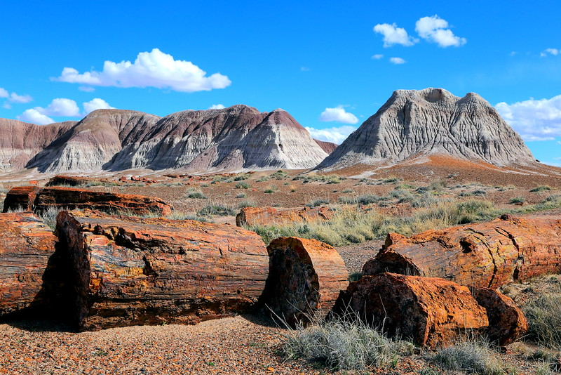 IMG_0474 Petrified Wood, Petrified Forest National Park