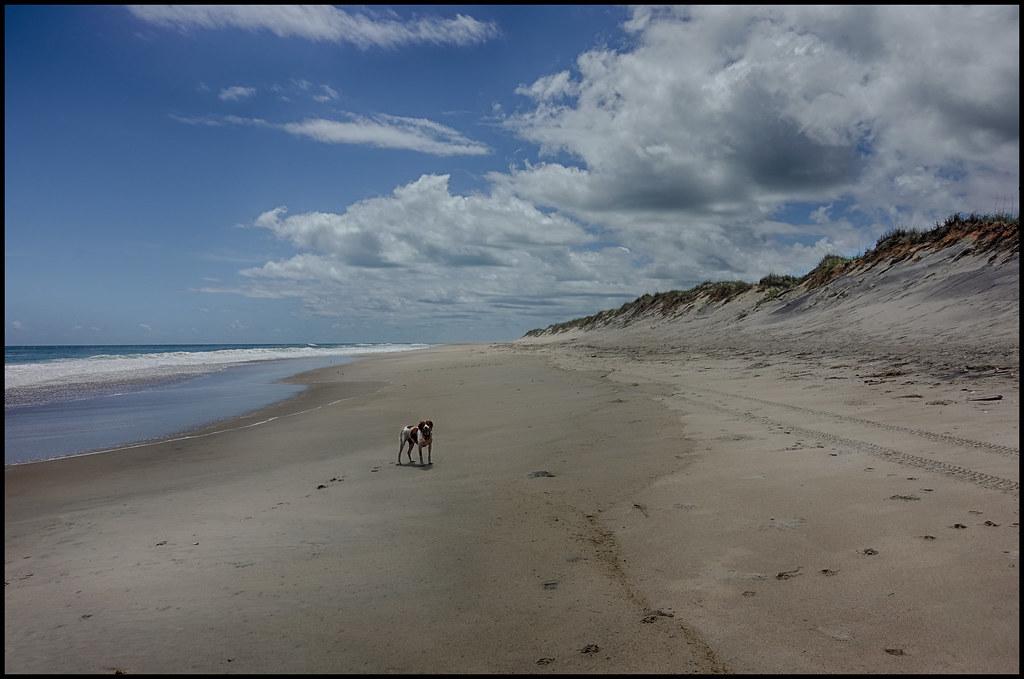 5-9-19 - Joy on the beach