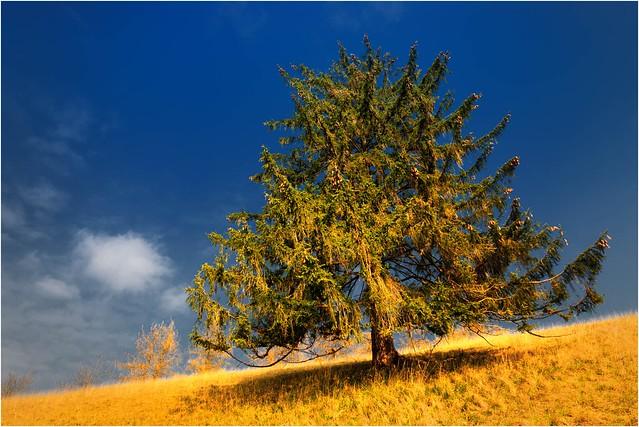 Der Schönwetterbaum
