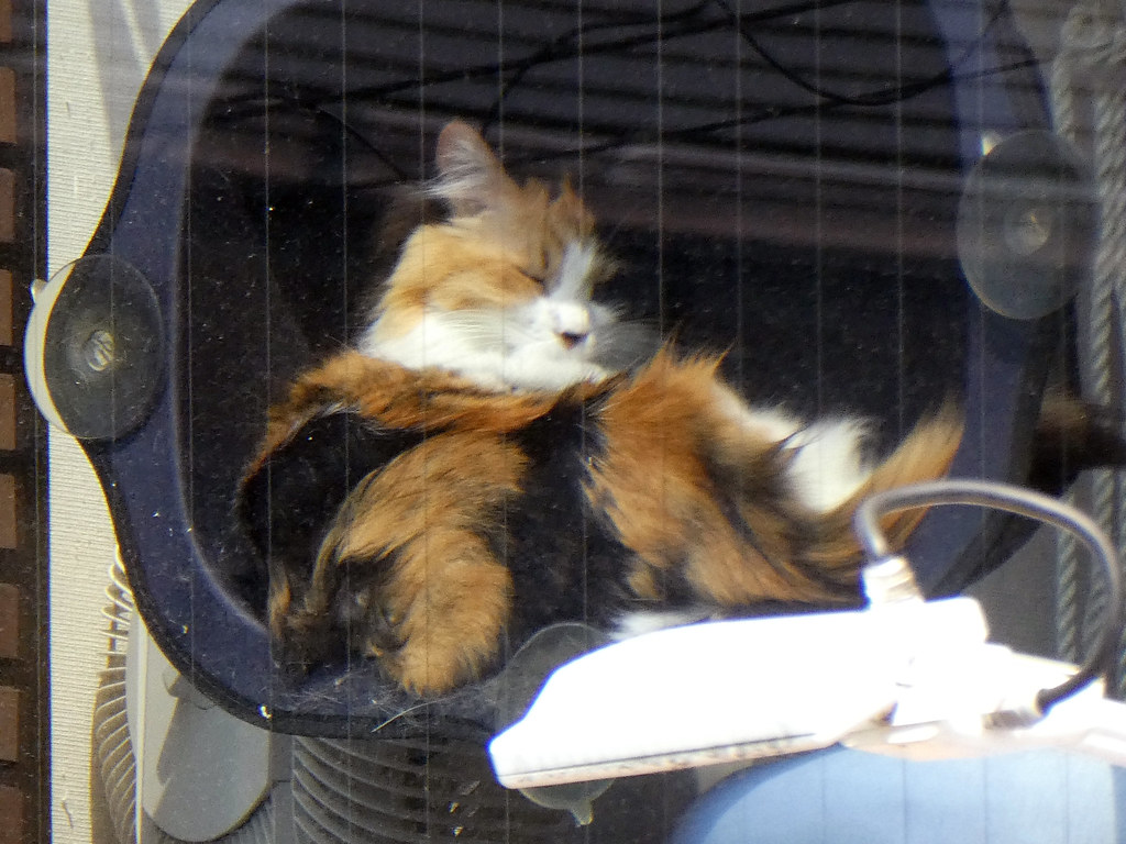 Котик в котокафе