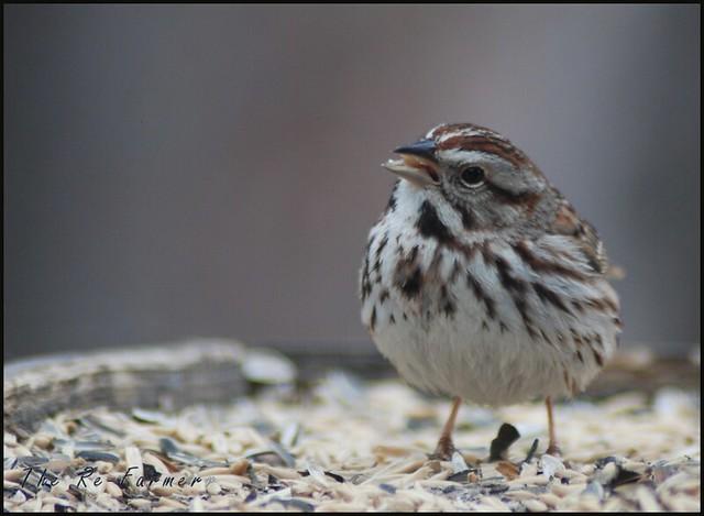 2019-04-27.sparrow