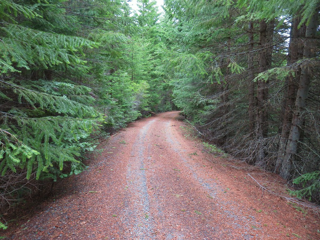 Forest Road 620