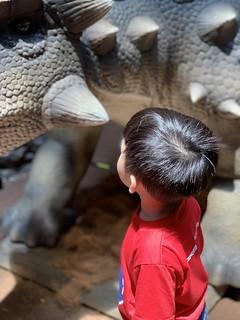 Dinosaur's Alive @ The Paradigm