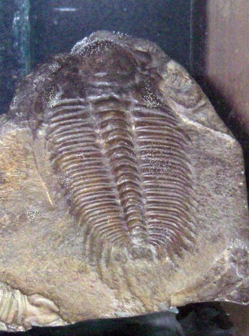 Hydrocephalus minor 47826893352_7c554ed42b_o