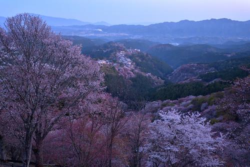japan 奈良県 吉野 桜 cherry 日の出 sunrise 世界遺産 worldheritage 金峯山寺 寺院 temple