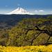 Memaloose Hills • Mount Hood by David Wang Photography