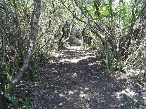 Le chemin de Luviu entre les deux plateaux herbeux (après nettoyage et ratissage)