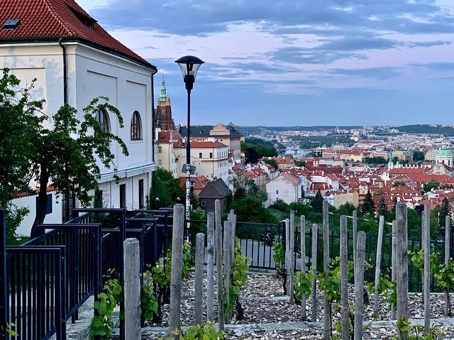 Prague from the monastery vineyard