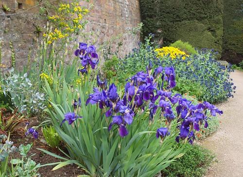 flowers iris gardens wales spring afternoon britain terraces may brickwalls paths walls nationaltrust shrubs powys midwales montgomeryshire yews welshpool sirdrefaldwyn flowerborders powiscastlegarden terracegardens gardenpaths