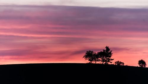 sunset silverfallsstatepark silverfalls oregon color colors pink sky purple blue landscape tree silhouette overlook scenery eyecandy pnw pacnorwest pacificnorthwest cascadia nikon nikkor d750 dslr nikond750