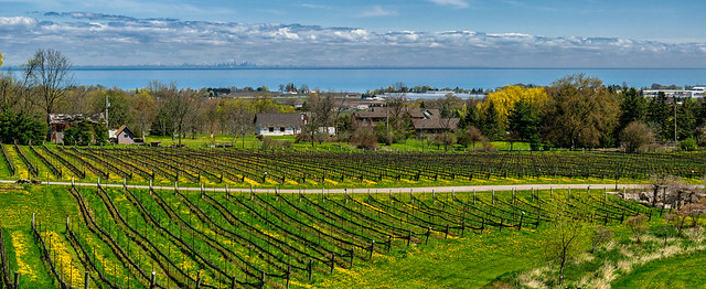 Pano from Angels Gate  Winery - 3463