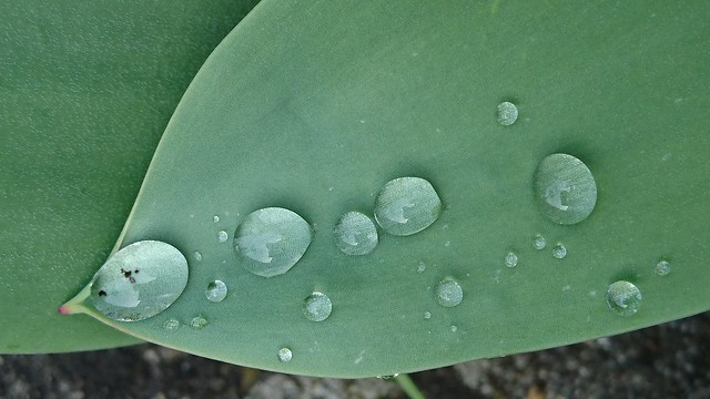 raindrops april 19 (7)