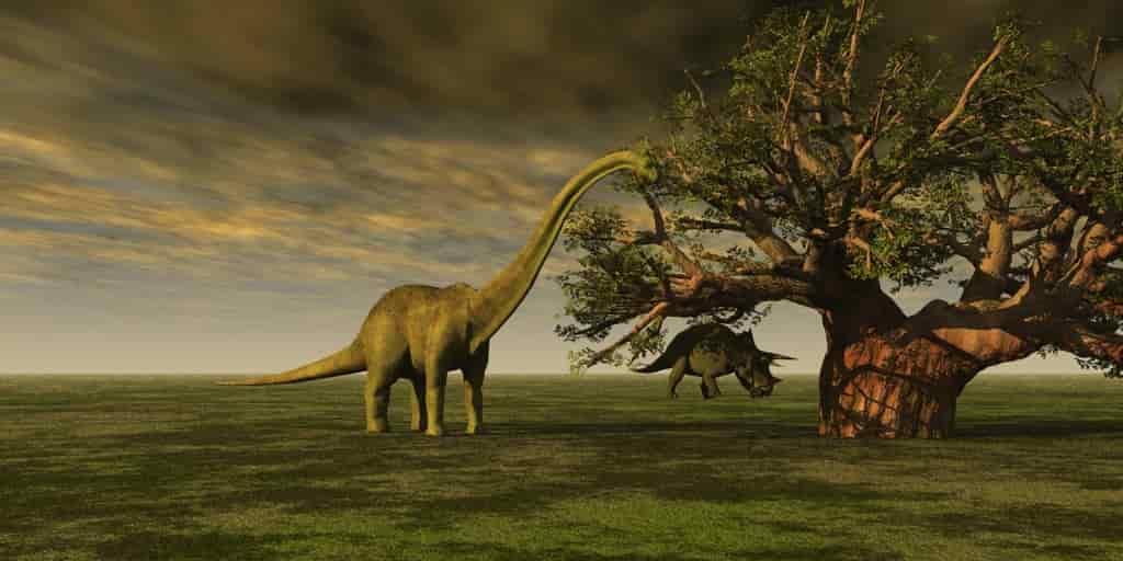Sauropodes-marche-découverte-analyse