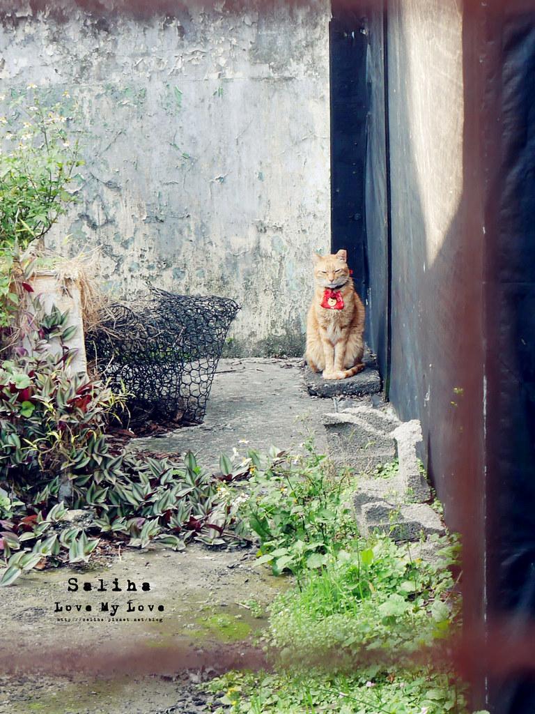 猴硐Empress Gallery Catwalk 219有貓咪咖啡館下午茶 (26)
