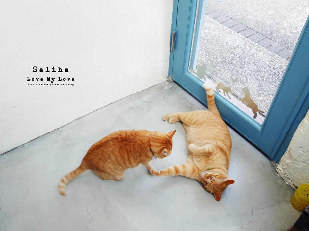 猴硐Empress Gallery Catwalk 219有貓咪咖啡館下午茶 (22)