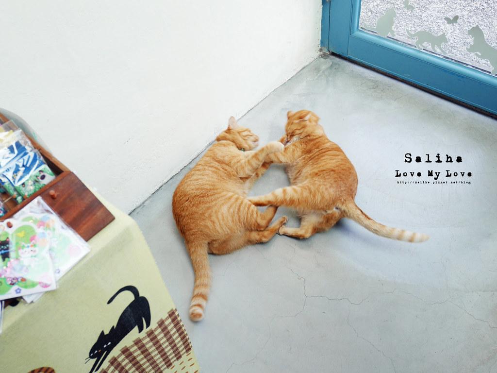 猴硐Empress Gallery Catwalk 219有貓咪咖啡館下午茶 (21)