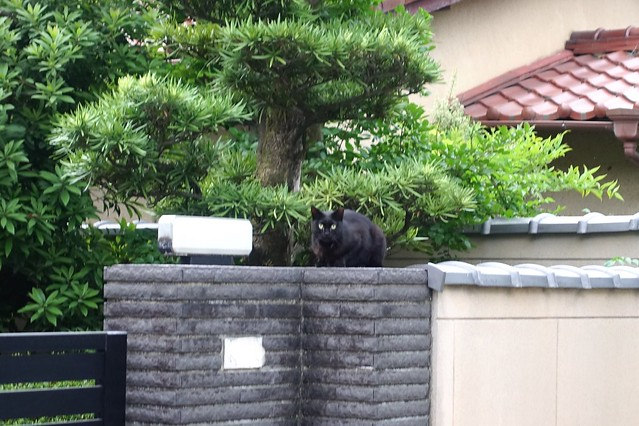Today's Cat@2019-05-20