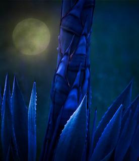 DE-Pepperwood-Full-Moon-Century