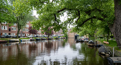 Trees Over Astel Canal
