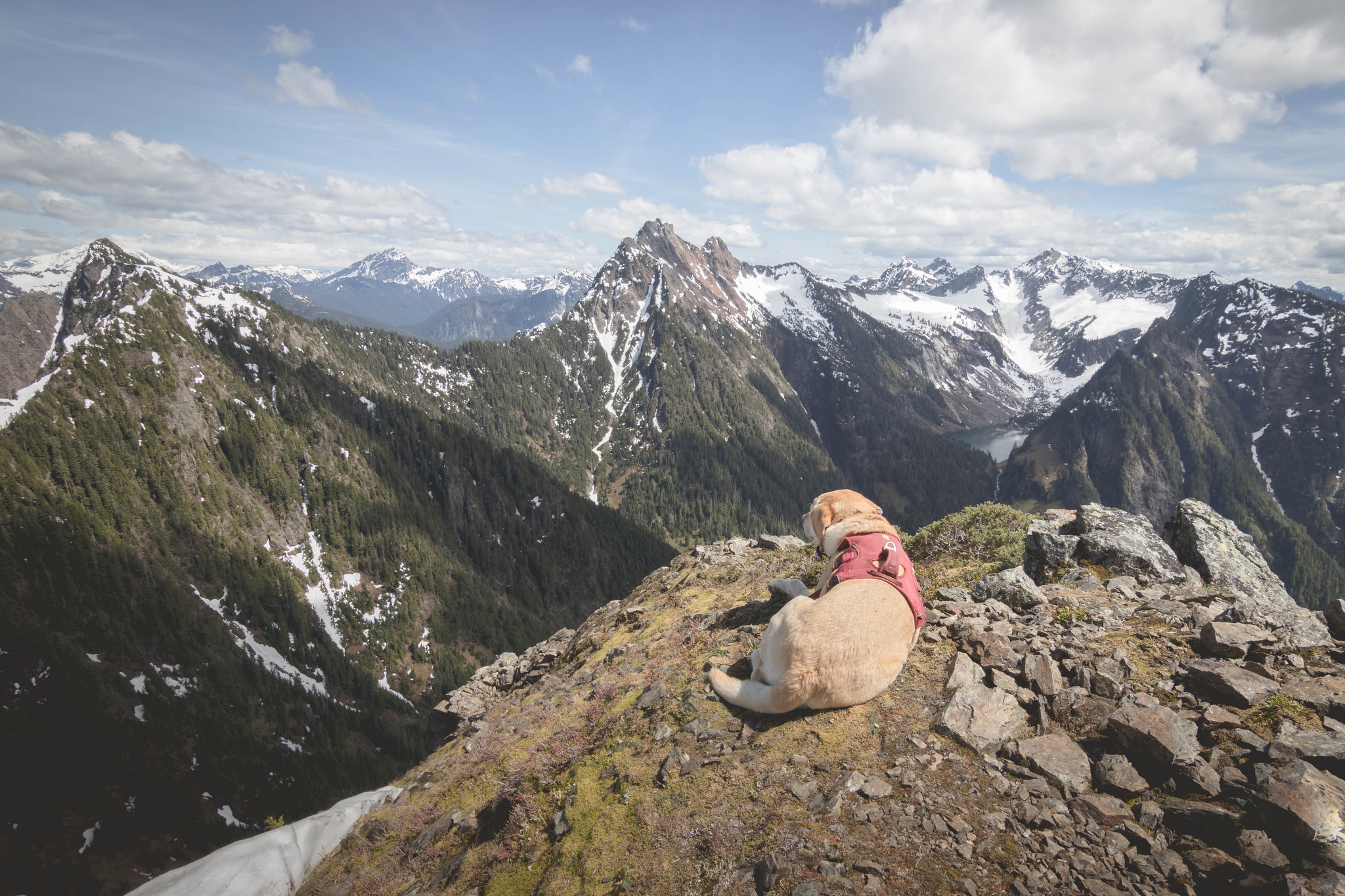 Summit dogs on Marble Peak