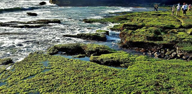 INDONESIEN, Bali -  Rund um den Meerestempel Pura Tanah Lot,  18196/11475