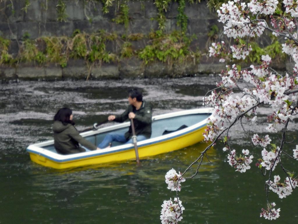 Лодка и сакура